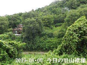 2019-08・06 今日の里山模様・・・ (7).JPG