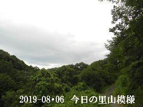 2019-08・06 今日の里山模様・・・ (8).JPG