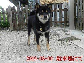 2019-08・06 今日の麻呂 (3).JPG