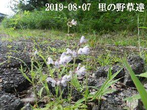 2019-08・07 今日の出遭い・・・ (1).JPG