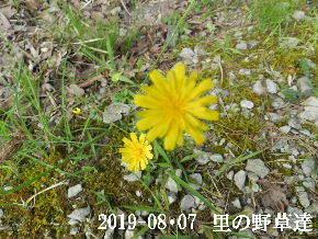 2019-08・07 今日の出遭い・・・ (2).JPG