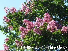 2019-08・07 今日の出遭い・・・ (4).JPG