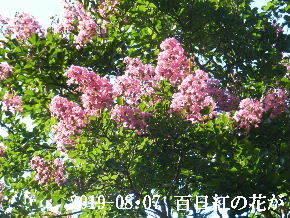 2019-08・07 今日の出遭い・・・ (5).JPG