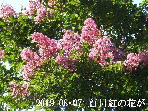 2019-08・07 今日の出遭い・・・ (6).JPG