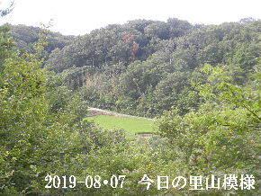 2019-08・07 今日の里山模様・・・ (4).JPG