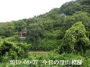2019-08・07 今日の里山模様・・・ (5).JPG