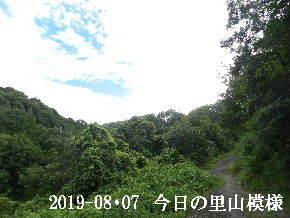 2019-08・07 今日の里山模様・・・ (6).JPG