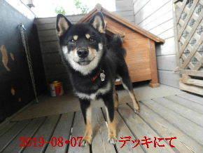 2019-08・07 今日の麻呂 (1).JPG