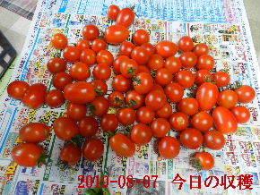 2019-08・07 我が家のスナップ・・・ (2).JPG