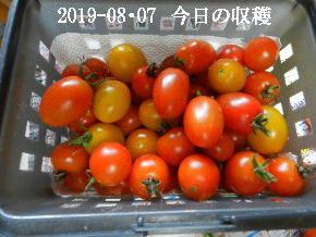 2019-08・07 我が家のスナップ・・・ (3).JPG