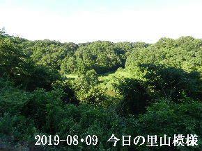 2019-08・09 今日の里山模様・・・ (3).JPG
