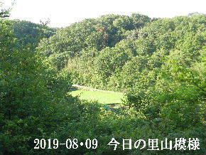 2019-08・09 今日の里山模様・・・ (4).JPG