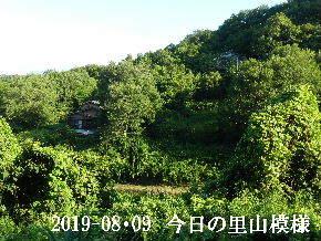 2019-08・09 今日の里山模様・・・ (5).JPG