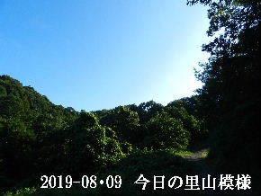 2019-08・09 今日の里山模様・・・ (6).JPG