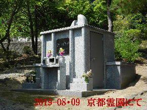 2019-08・09 我が家の墓地公園で (1).JPG