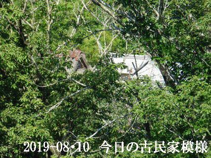 2019-08・10 今日の古民家模様.JPG