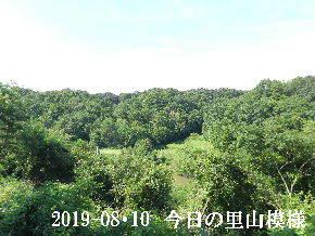 2019-08・10 今日の里山模様・・・ (3).JPG