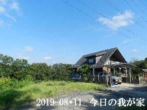 2019-08・11 今日の里山模様・・・ (1).JPG
