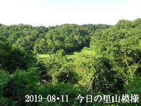 2019-08・11 今日の里山模様・・・ (3).JPG
