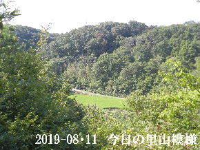 2019-08・11 今日の里山模様・・・ (4).JPG