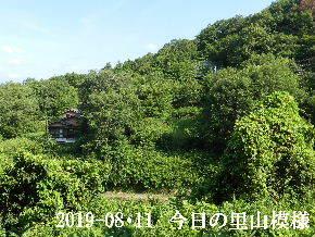 2019-08・11 今日の里山模様・・・ (5).JPG