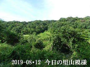 2019-08・12 今日の里山模様・・・ (3).JPG
