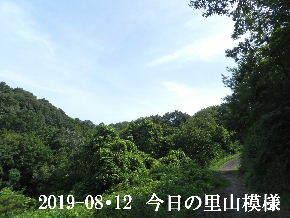 2019-08・12 今日の里山模様・・・ (6).JPG
