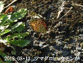 2019-08・13 今日の出遭い・・・ (5).JPG
