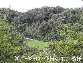 2019-08・13 今日の里山模様・・・ (4).JPG