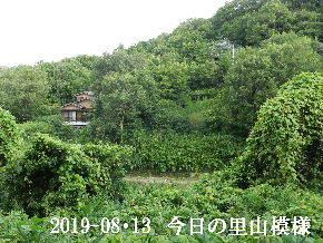 2019-08・13 今日の里山模様・・・ (5).JPG