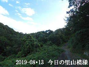 2019-08・13 今日の里山模様・・・ (6).JPG