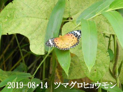 2019-08・14 今日の出遭い・・・ (1).JPG