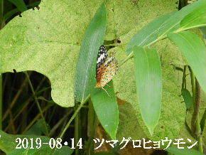 2019-08・14 今日の出遭い・・・ (3).JPG