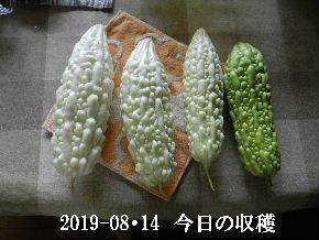 2019-08・14 今日の収穫・・・ (1).JPG