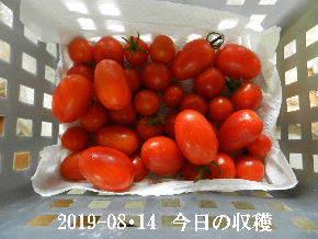 2019-08・14 今日の収穫・・・ (2).JPG