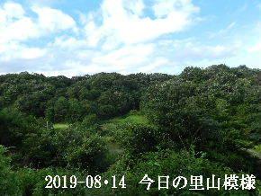 2019-08・14 今日の里山模様・・・ (3).JPG