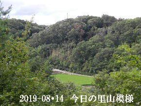 2019-08・14 今日の里山模様・・・ (4).JPG