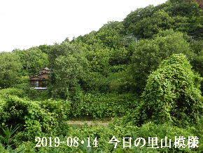 2019-08・14 今日の里山模様・・・ (5).JPG