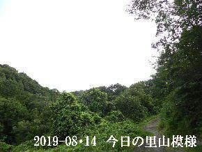 2019-08・14 今日の里山模様・・・ (6).JPG