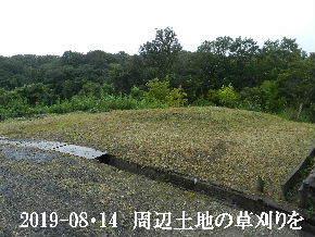 2019-08・14 我が家のスナップ・・・ (2).JPG