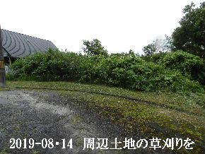 2019-08・14 我が家のスナップ・・・ (5).JPG
