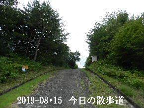 2019-08・15 今日の散歩道・・・ (2).JPG