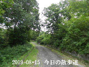 2019-08・15 今日の散歩道・・・ (3).JPG