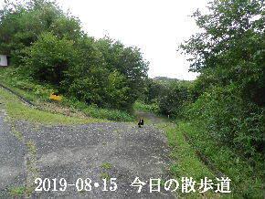 2019-08・15 今日の散歩道・・・ (4).JPG