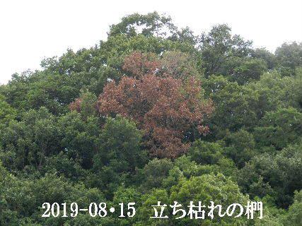 2019-08・15 今日の散歩道・・・ (5).JPG