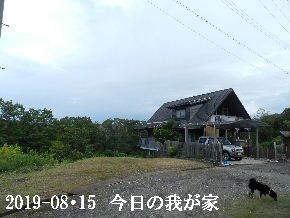 2019-08・15 今日の里山模様・・・ (1).JPG