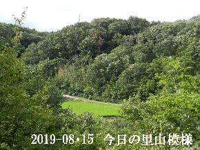 2019-08・15 今日の里山模様・・・ (4).JPG