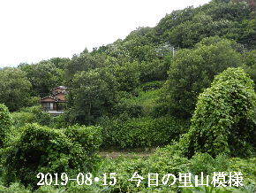 2019-08・15 今日の里山模様・・・ (6).JPG