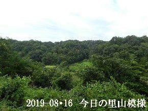 2019-08・16 今日の里山模様・・・ (3).JPG