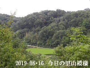 2019-08・16 今日の里山模様・・・ (4).JPG